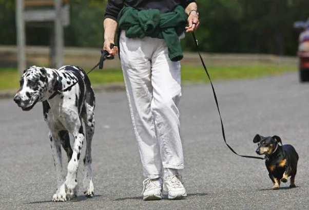 Выгуливание собаки